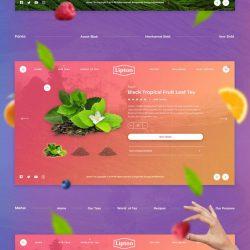 水果网站设计.jpg